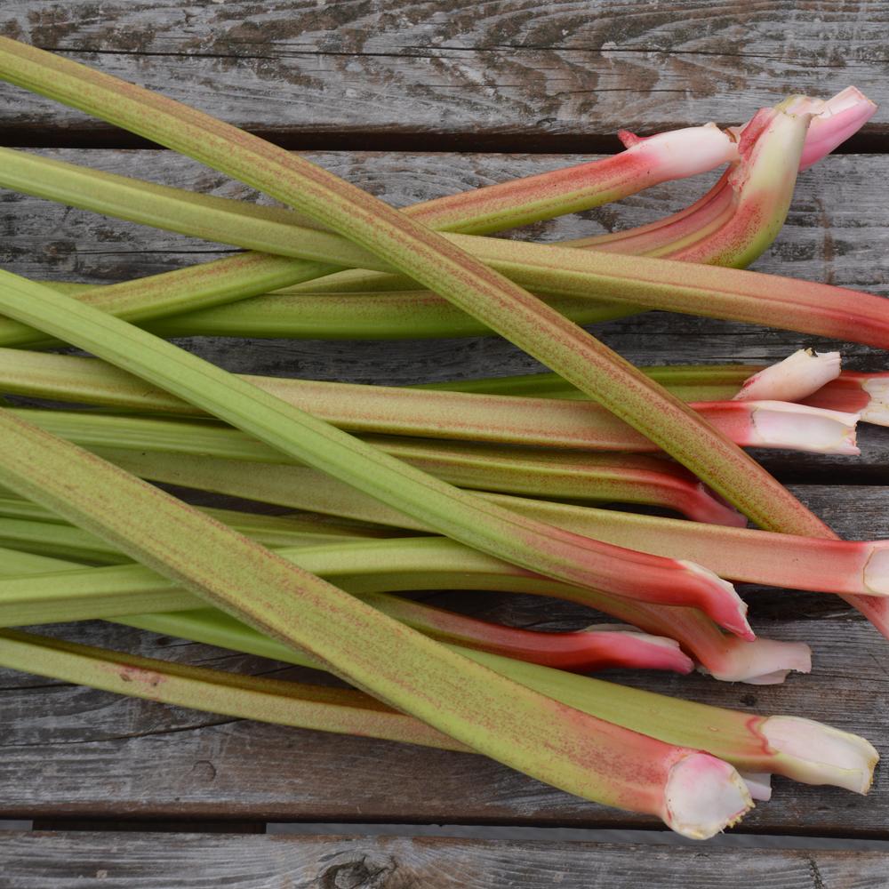 Culture Et Entretien De La Rhubarbe rhubarbe victoria - bio - jardins de l'écoumène