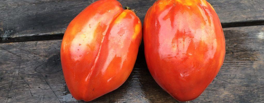 Tomate-standard_Ancienne_ditalie3